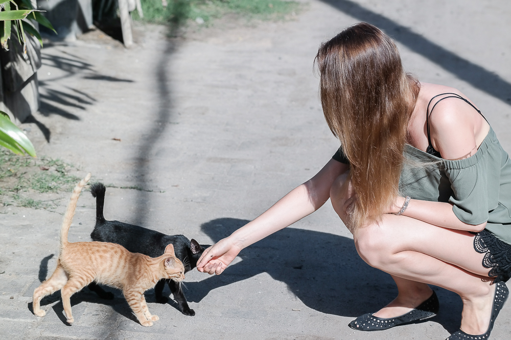 süße Katzen auf Bali