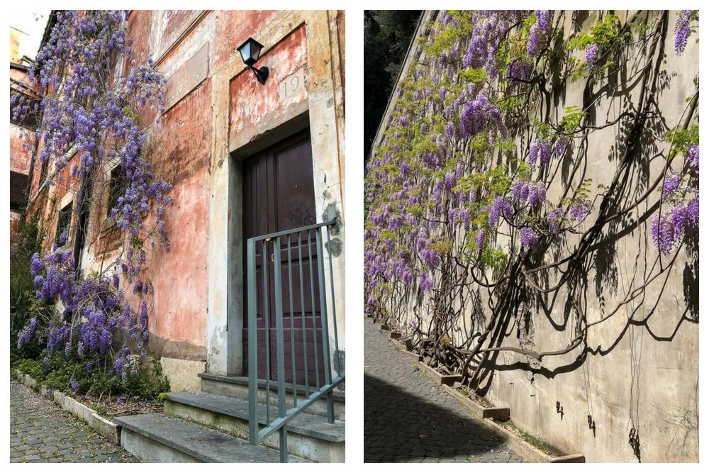 Blauregen in Rom Fotospots - Häuser Fassade