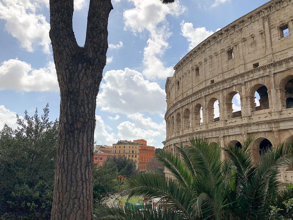 Kolosseum Fotospot mit Palme